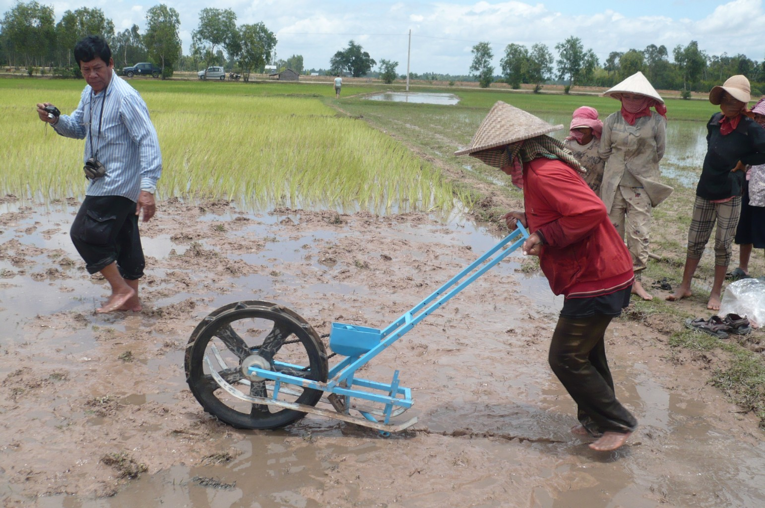 """A """"rice runner"""" inserting fertilizer pellet in a rice paddy in southeast Asia."""