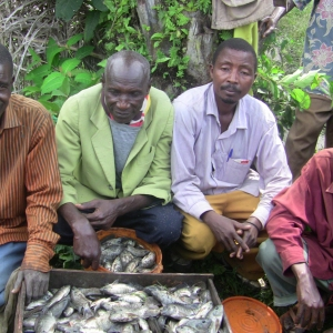 Burundian men with the product of the Village Health Works-sponored fish farm.
