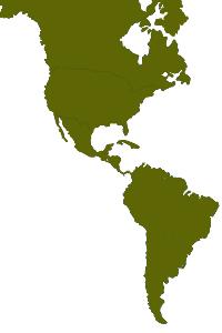 westernhemiextractedgreen